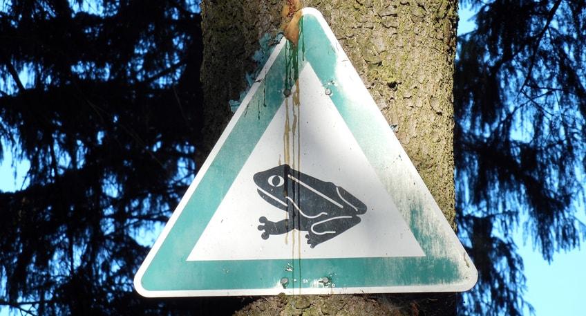 Vorsicht Autofahrer: Amphibienwanderung auf Mindener Straßen