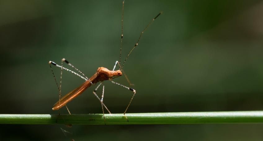Vortrag: Insektensterben – Ursachen, Folgen und Perspektiven