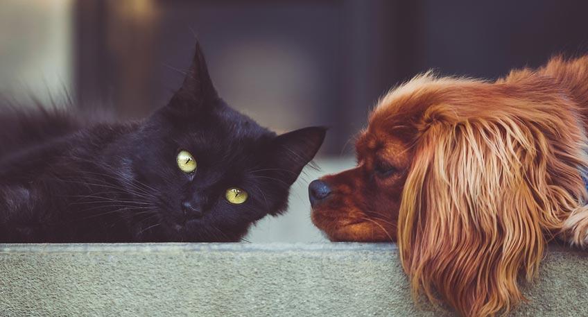 Wann sich eine Haftpflichtversicherung für Haustiere lohnt