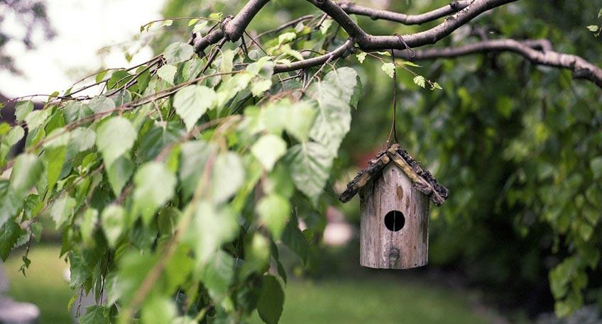 Bäume sind ein wichtiger Beitrag im aktiven Klimaschutz, sie spenden im Sommer Schatten, Verbessern das örtliche Klima, Filtern Schadstoffe aus der Luft, bieten Lebensraum für Tiere und erhöhen die Ästhetik des Wohnumfelds.