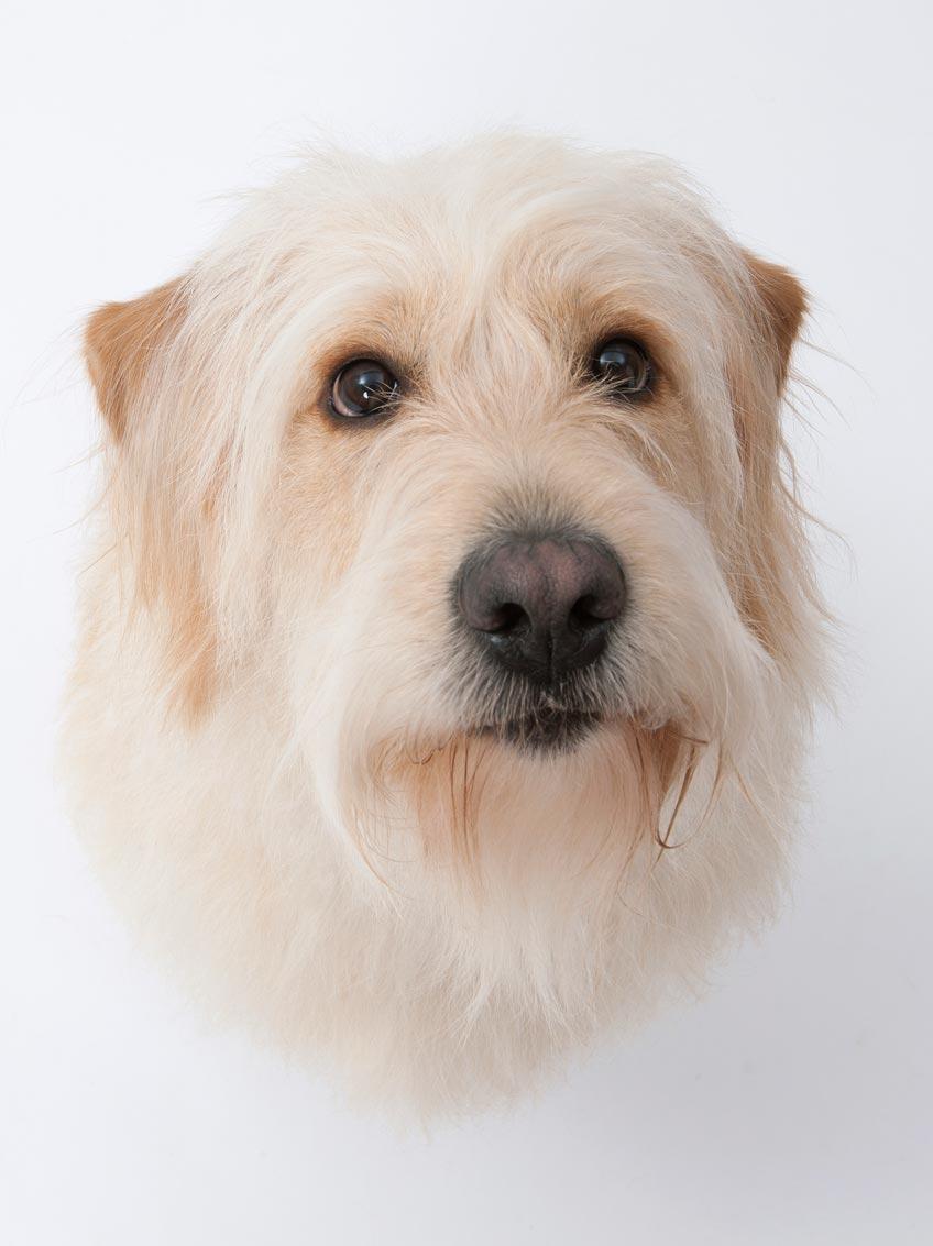 hallo minden profil Logodog