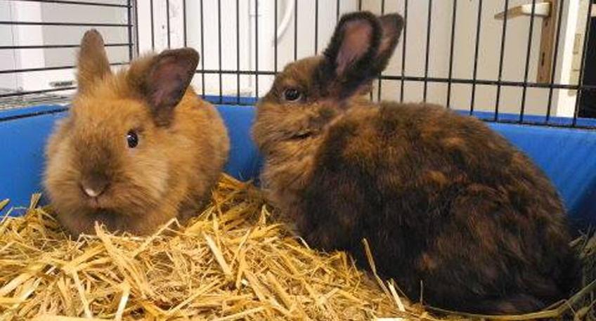nachrichten minden kaninchen in gro er zahl beim tierheim abgestellt hallo minden. Black Bedroom Furniture Sets. Home Design Ideas